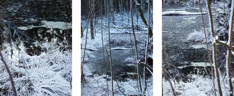 Rude Skov med sne og et sort/hvids landskab