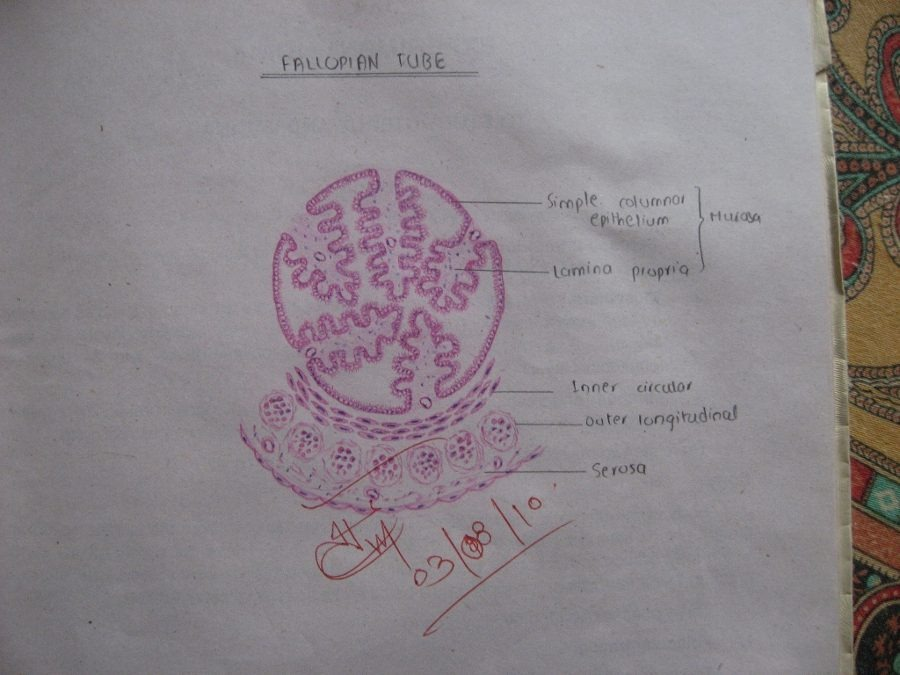 Medical Education For Students  Histology Diagrams For M B