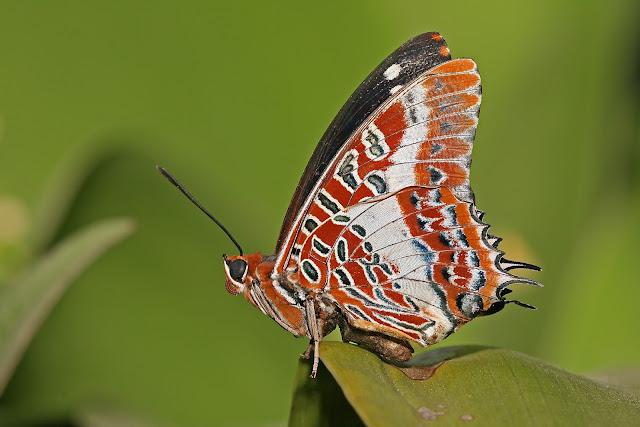Mariposas en HD