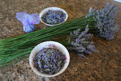 Long-stemmed lavender, Lavendula grosso, as a dried flower and potpourri.