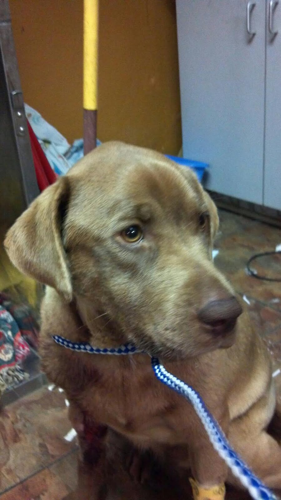 emergency vet clinics near me clinic pets world