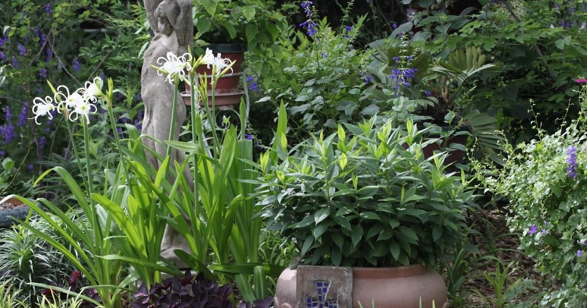 Rock-Oak-Deer: Central Texas Gardener tours a special garden this week