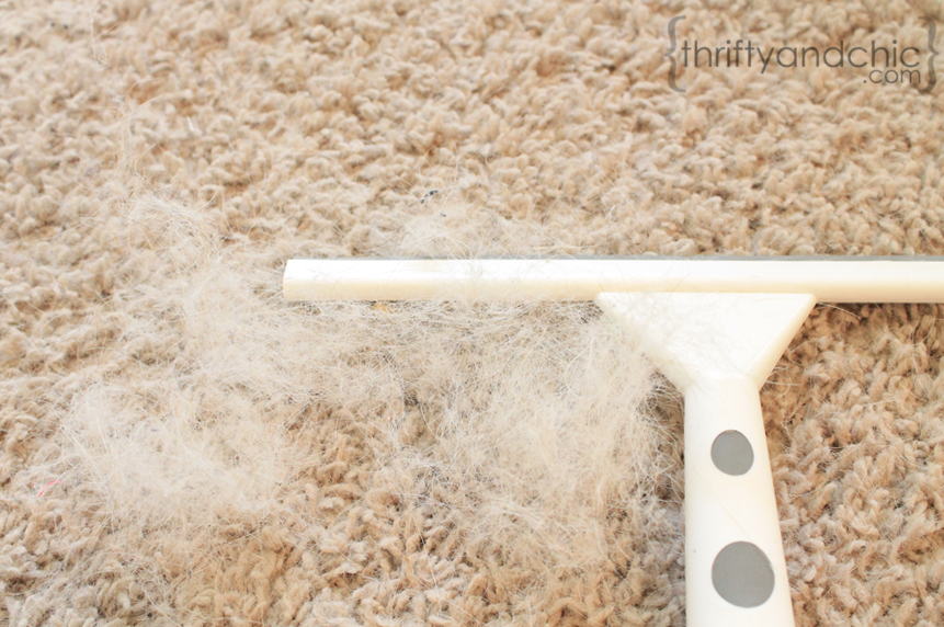 how to clean dog poop off your carpet