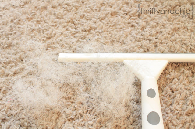 Remove Dog Hair From Carpet