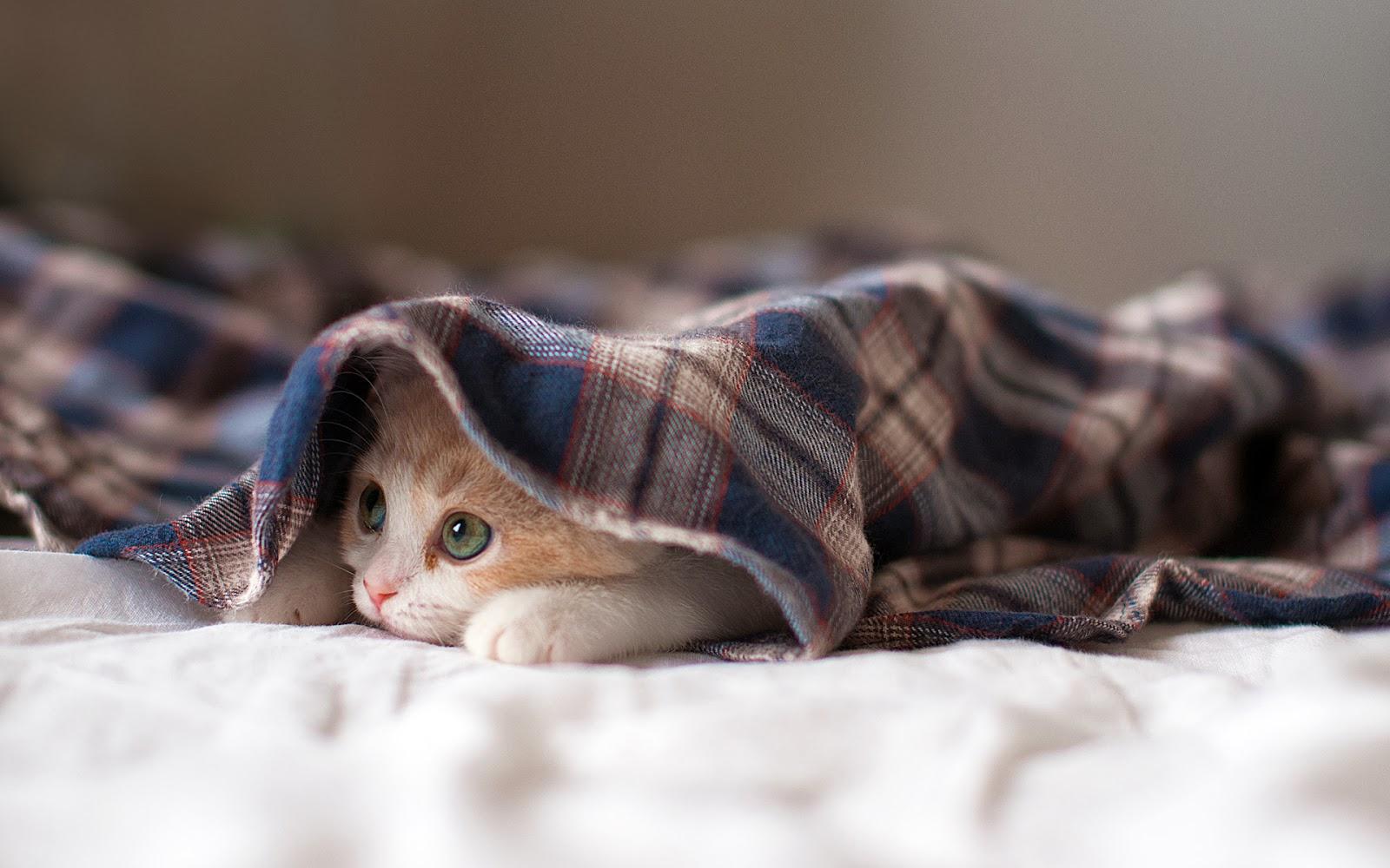 """<img src=""""http://1.bp.blogspot.com/-OONqRZFk3VE/UtgF8l-e5hI/AAAAAAAAISs/LgpSn1WU78A/s1600/sleepy-kitten.jpg"""" alt=""""Animal wallpapers"""" />"""