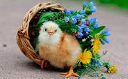 Guardado en: Animales, Animales Salvajes, Aves, Aves Exoticas