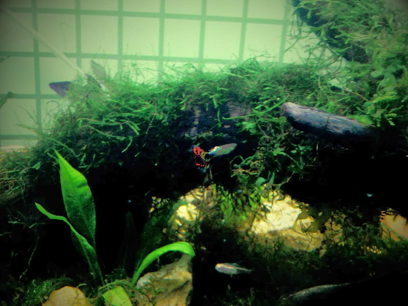 Artikel Tentang Cara Membuat Filter Aquarium Murah Dan Sederhana | CA ...