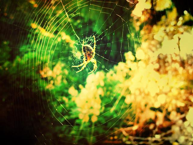 net spider web tao te ching oneness