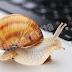 Cara Mengatasi Laptop/Komputer Lemot Dan Penyebabnya