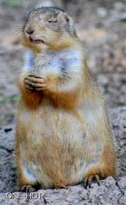 Tuhan, aku adalah salah satu binatang yang cinta damai, damaikanlah umat binatang di dunia ini, amin..