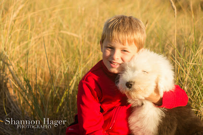 Shannon Hager Photography, Sunset Portraits, Field Portraits, Old English Sheepdog Puppy