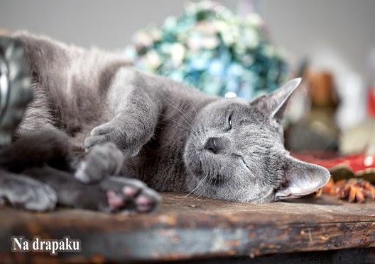 Cukrzyca u kotów