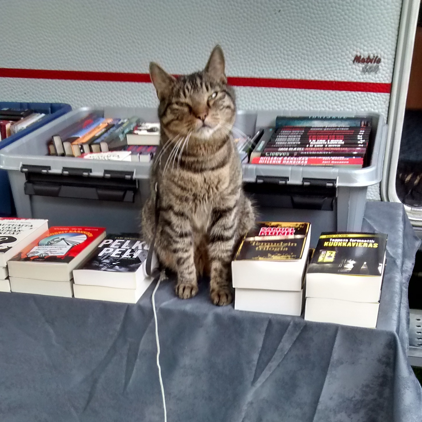 The undoubted star of the show at the Dekkarit Festival... the bookshop cat.