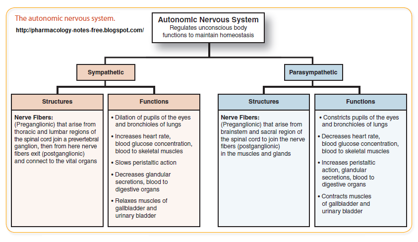 drugs and the nervous system notes essay Literature notes  nervous system organization all  your future acquisition of knowledge about the nervous system the nervous system consists.