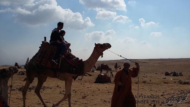 unta Mesir
