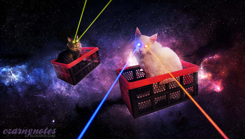 koty w kosmosie cats in space