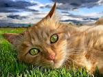 CAT's EYES!