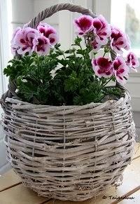 Tämä blogi on kauniita kukkia,