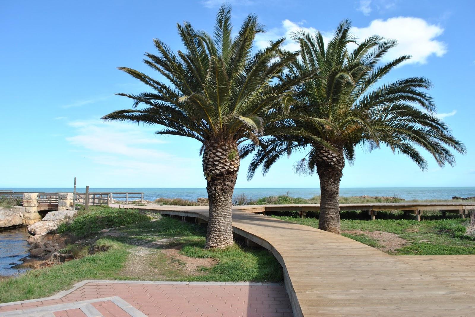 Plantas y jardines de castell n la palmera canaria for Jardines con palmeras