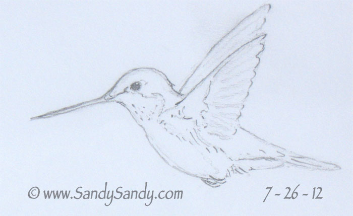 Line Drawing Hummingbird : Drawing everyday a kitten horse and two hummingbird