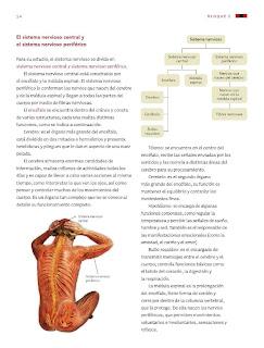 Apoyo Primaria Ciencias Naturales 6to Grado Bloque I Tema I Coordinación y defensa del cuerpo humano