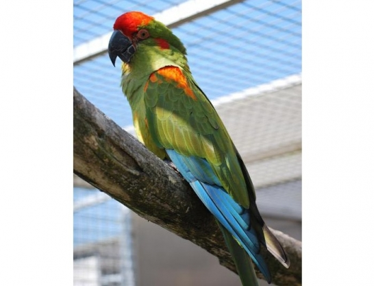 Nourrir son animal de compagnie la voli re pour canaris for Oiseau domestique interieur
