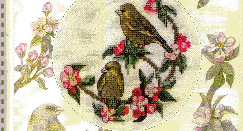 PLANETA PONTO CRUZ 2: Greenfinches