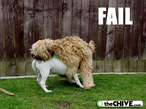 Pet Funny Animals Dogs