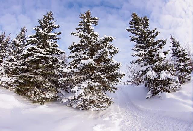 Imbracaminte de iarna