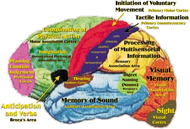Brain Function Chart8
