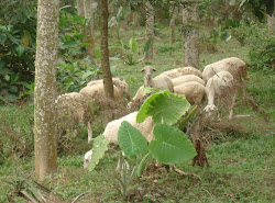 crop  livestock systems
