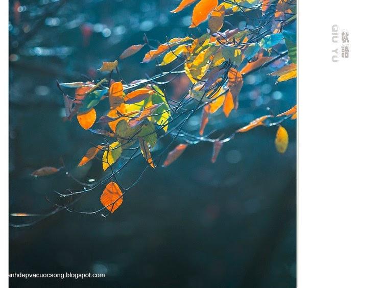 Chiếc lá mùa thu 6