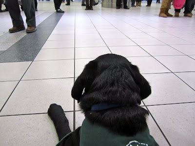 Black lab puppy Romero is wearing his green Future Dog Guide jacket and lying on the grey and white tiled floor at the airport. The picture is taken at Romero's level from behind his head. The area right in front of Romero is clear, but several feet away you can see the legs of the many people milling about as they wait for friends and family to arrive. Romero is relaxed in a down position, but has his head up looking out at the action around him.