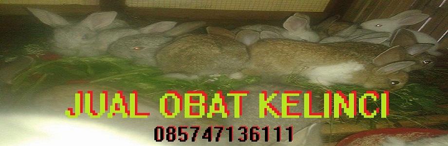 Jual Obat kelinci