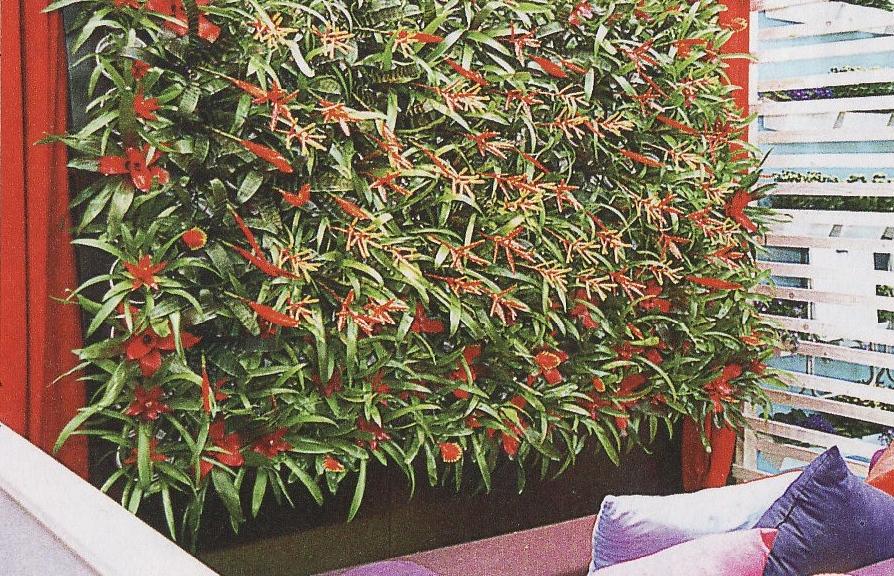 jardim vertical no sol: de vários formatos e tamanhos para compor seu jardim vertical