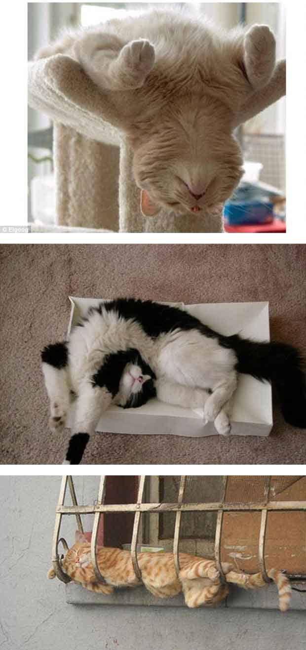 Comel Kot Koleksi Kucing Kucing Sedang Tidur Yang Cute