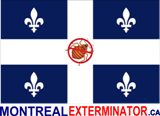 Montreal Bed Bug Exterminator