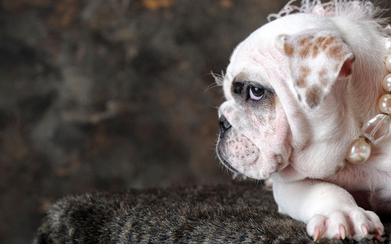 Fotos Divertidas de Perros, parte 3