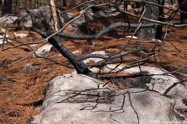 Après le feu, Potala, Vallée de la Mée, Trois Pignons, (C) 2015 Greg Clouzeau