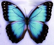 Anuncian tiempos mejores, mariposas de colores