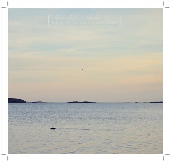 seal bohuslän sweden