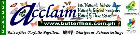 Acclaim Butterflies