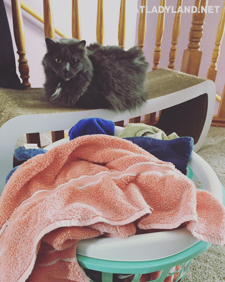 catladyland cats are funny a cat s thoughts before the laundry basket