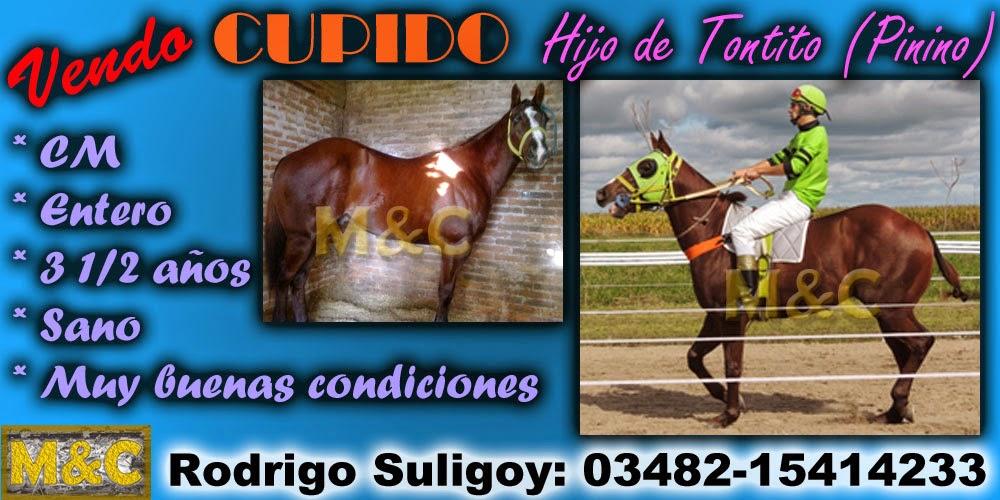 CUPIDO - 15-01-15