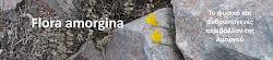 Flora amorgina
