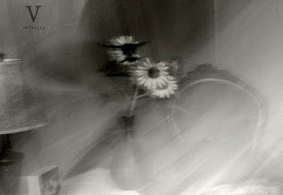 sunflower ghosts~long exposures