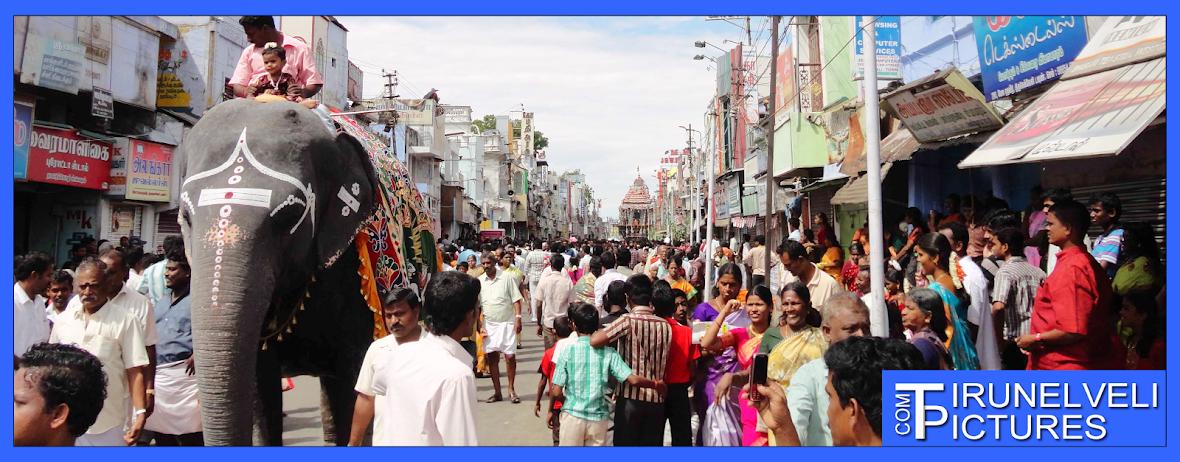 Tirunelveli Pictures, Tirunelveli Car Festival,- http://pictures.tirunelveli.me
