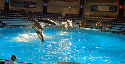 Dolphin show at the Epson Aquarium, Prince Hotel Shinagawa - Japan