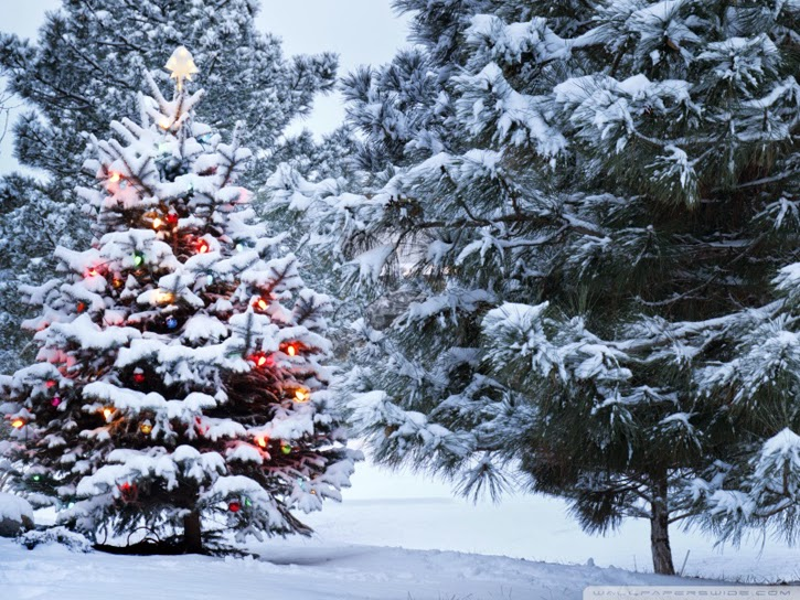 http://wallpaperswide.com/beautiful_outdoor_christmas_tree-wallpapers.html