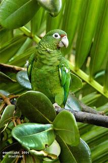 5 Besar Burung Paling Langka di Dunia